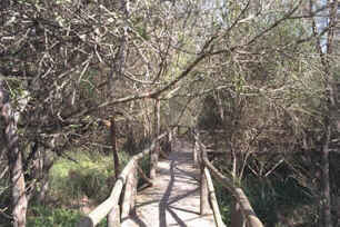 Walk in the Donana Natural Park
