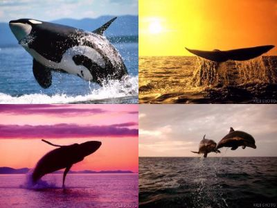 Watch Whales and Dolphins at Tarifa, La Linea or Gibraltar Only about 1 hour from Casa de Alhambra, La Barossa, Andalucia